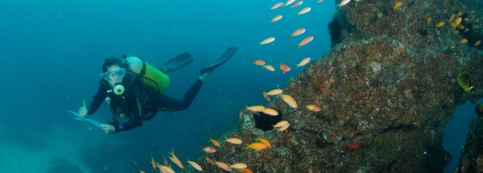 Diving Honeymoon Adventure
