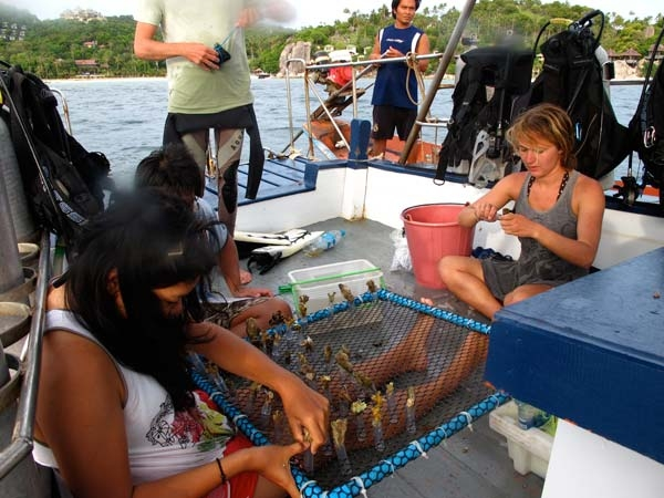 Volunteers check marine flora and fauna samples they have collected