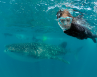 Meet a new partner underwater on your honeymoon in Mozambique with Kaya