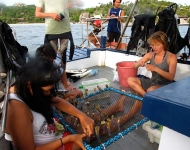 Volunteers check marine flora and fauna samples they have collected.