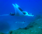 Kaya honeymoons, Mozambique, sting ray